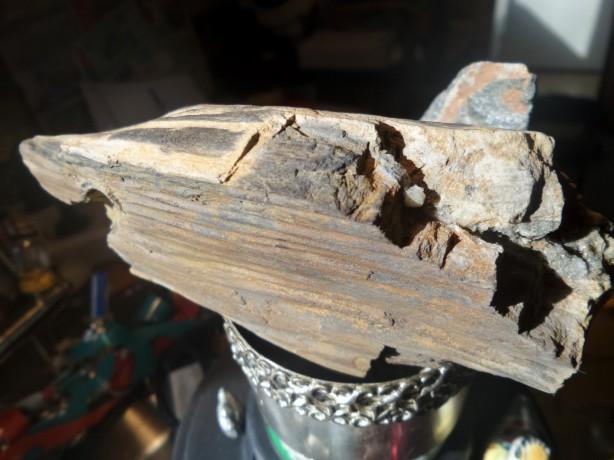 Versteend hout Nederland